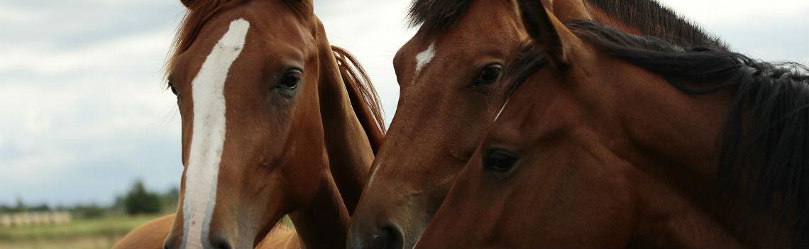 Horse Feeds Northern Ireland FS Herron
