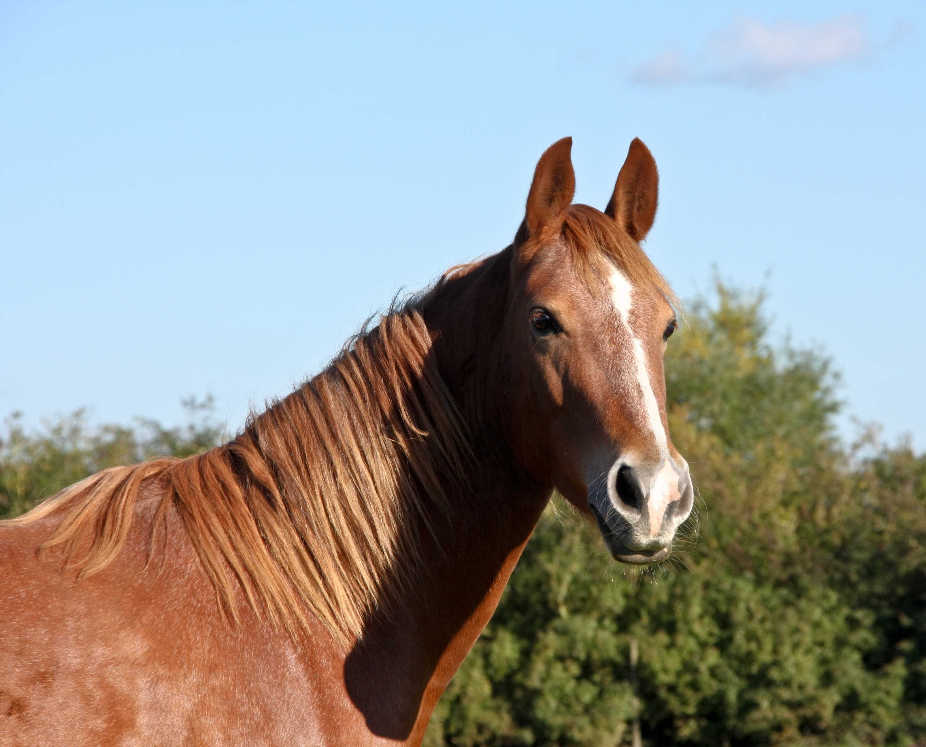 horses-379806_1920